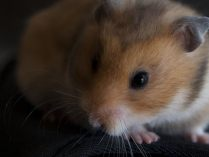 Hamsters em wallpapers